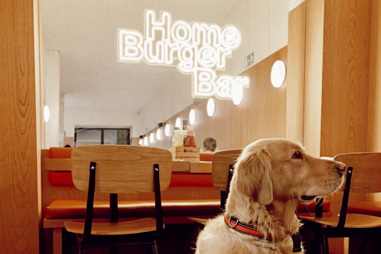 https://www.homeburgerbar.com/%C2%A1Ven%20con%20tu%20mascota%20a%20Home%20Burger%21